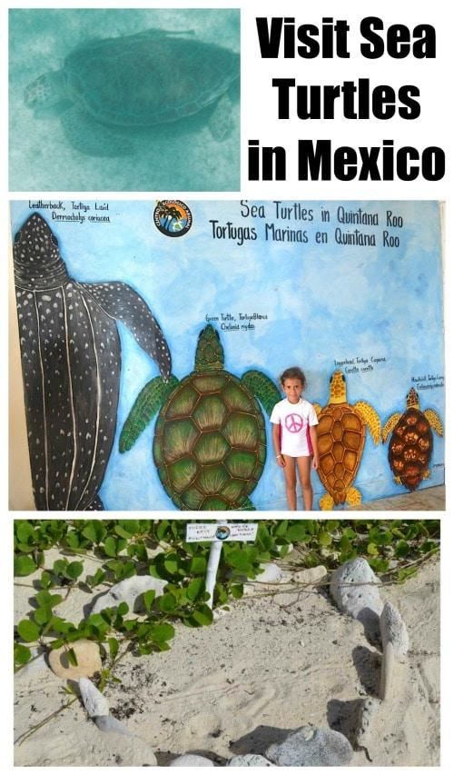 Sea Turtles in Mexico- Kid World Citizen