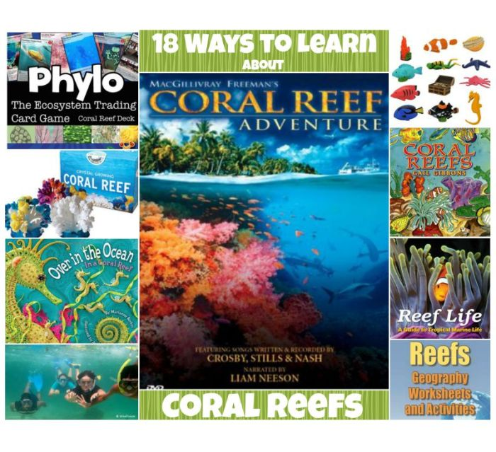 Lessons Activities to Learn about Coral Reefs for Kids- Kid World Citizen