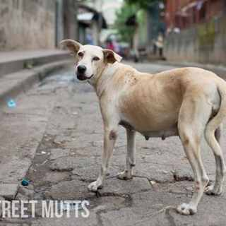 Make a Difference: Street Mutts Around the World