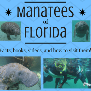 Learn about Manatees & Visit the Manatees in Florida, US