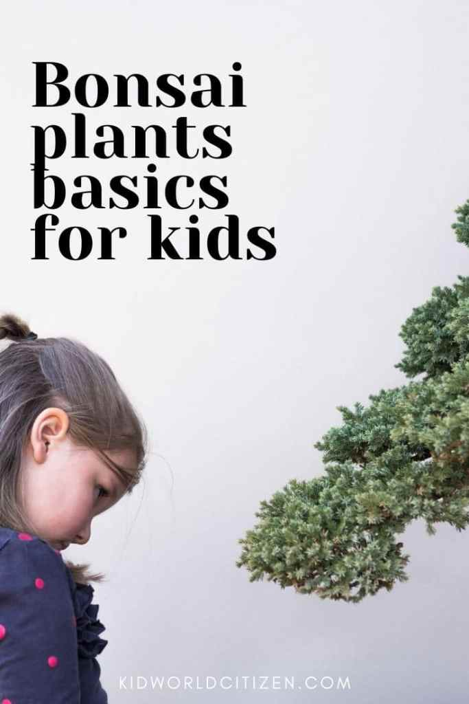 Bonsai plants basics for kids