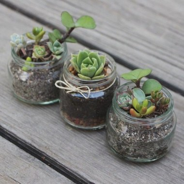 20 Cute DIY Tiny Plants Ideas 11