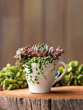 20 Lovely Fall Succulent Planters For Your Home Decoration 03