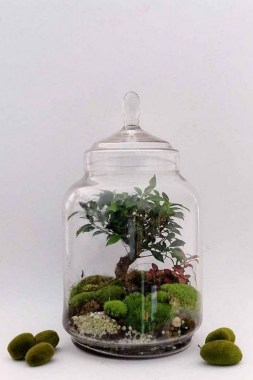 32 Simple Ideas For Adorable Terrariums 08