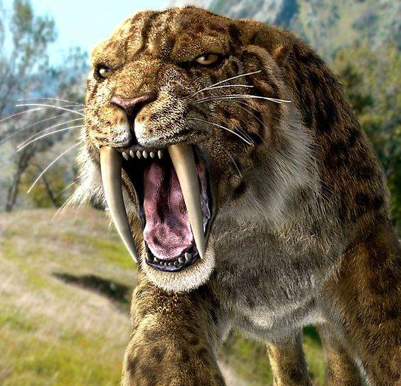Sabre-tooth tiger study suggests they hunted in packs ...