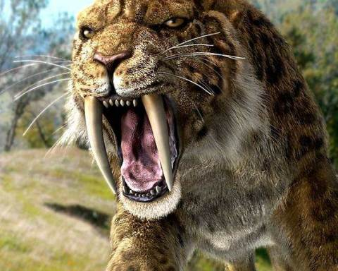 what is a saber tooth tiger