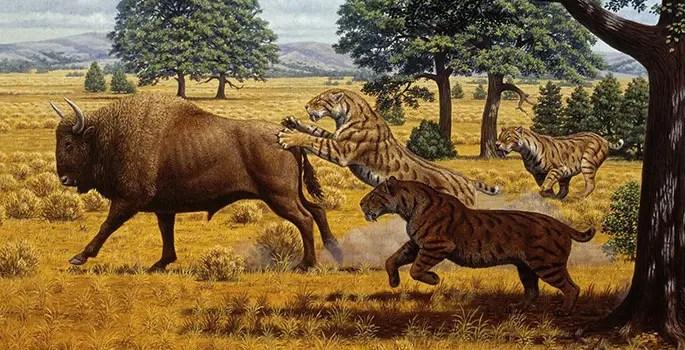 saber tooth tiger prey
