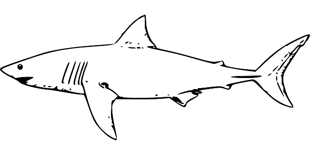Tiger shark drawing