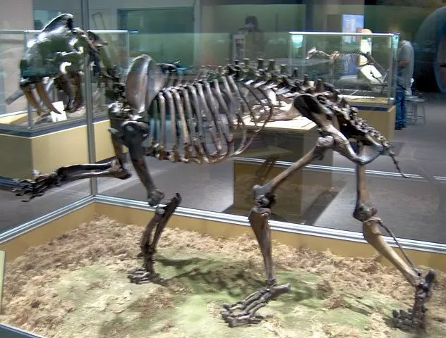 Saber Tooth Cat Skeleton