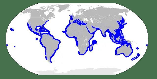 Hammerhead Shark Habitat Map