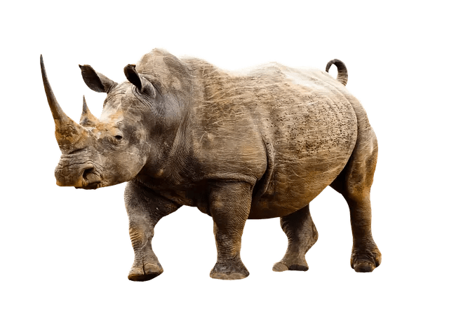 Rhino Facts For Kids - All About Rhinos