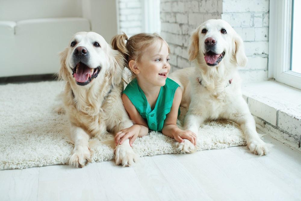 Huisdieren verzorgen
