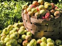 Apfel-Mostfest