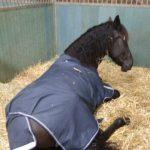 Paard ligt in de stal