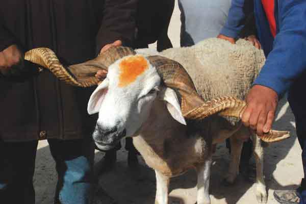 """بسبب الظروف الاقتصادية.. تونس """"تلغي"""" عيد الأضحى"""