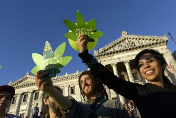 الأوروغواي.. أول دولة تشرع زراعة الكيف وبيعه