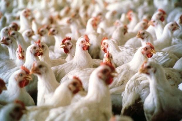 قفة رمضان.. انخفاض في سعر الدجاج والبصل وارتفاع في ثمن الطماطم والسردين والبرتقال