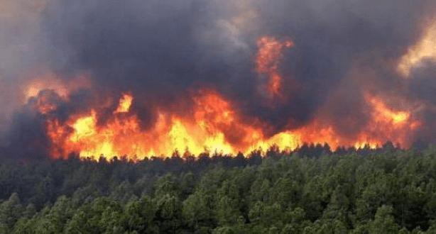 زمزم/ المضيق الفنيدق.. حريق يلتهم حوالي 74 هكتارا من الغابة