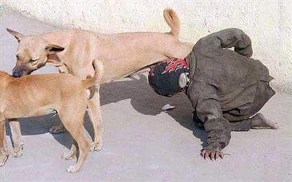 بعدما راج أنها التقطت في تزنيت.. وزارة الداخلية توضح حقيقة صورة شخص يرضع ثدي كلبة!!