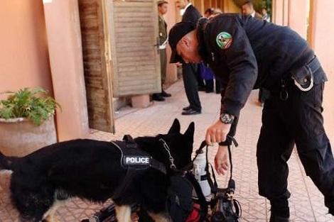 مطار كازا.. دورة تكوينية لتدريب الكلاب البوليسية على رصد الأجسام المتفجرة في حقائب السفر