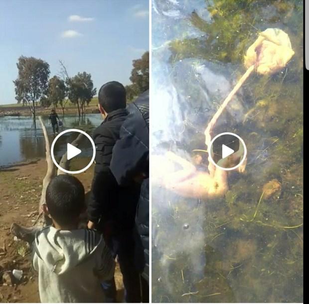 بالفيديو من كازا.. جثة رضيع في بركة ماء!