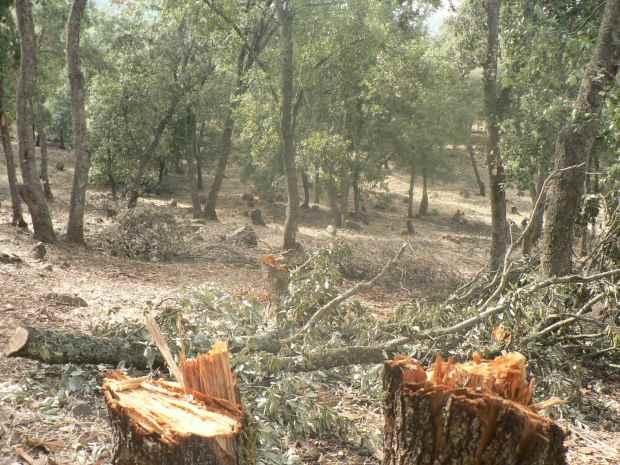 القنيطرة.. الغابة ب1000 درهم للمتر مربع!