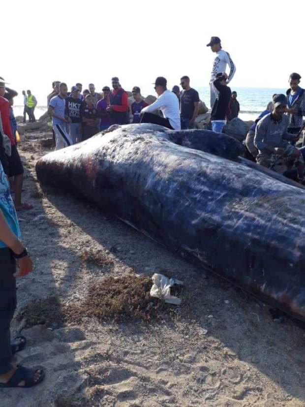 بالفيديو من سلا.. حوت ضخم لاحو البحر فتحول إلى وجبة إفطار!