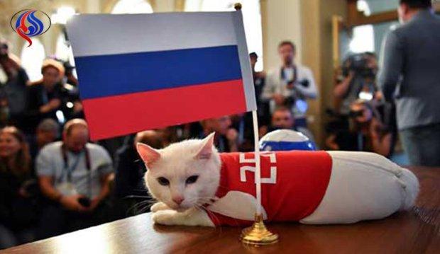 """اختار إيران.. القط """"آخيل"""" كيفايل علينا بالخسارة!"""