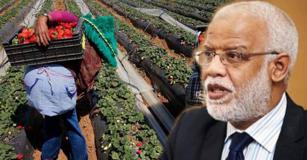 يتيم يتراجع: لم أنف تعرض العاملات المغربيات في الحقول الإسبانية للتحرش