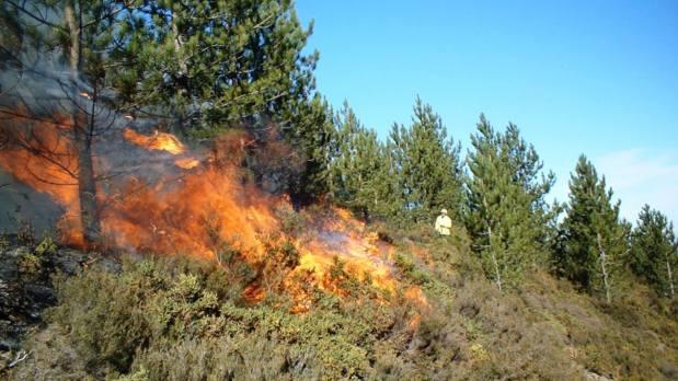 خسائر كبيرة.. حريق كبير في غابة سبتة