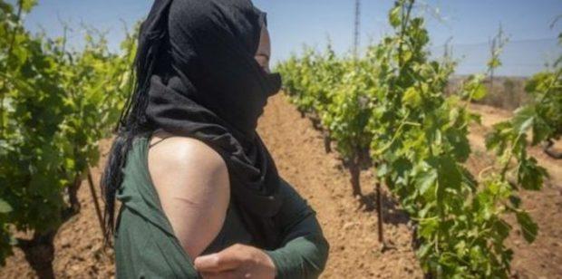 نوهت بإجراءات النيابة العامة.. فيدرالية نسائية تدعو إلى دعم عاملات الفراولة في إسبانيا