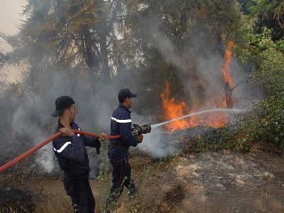 النيران التهمت 111 هكتارا.. خطر الحرائق يهدد الغابات