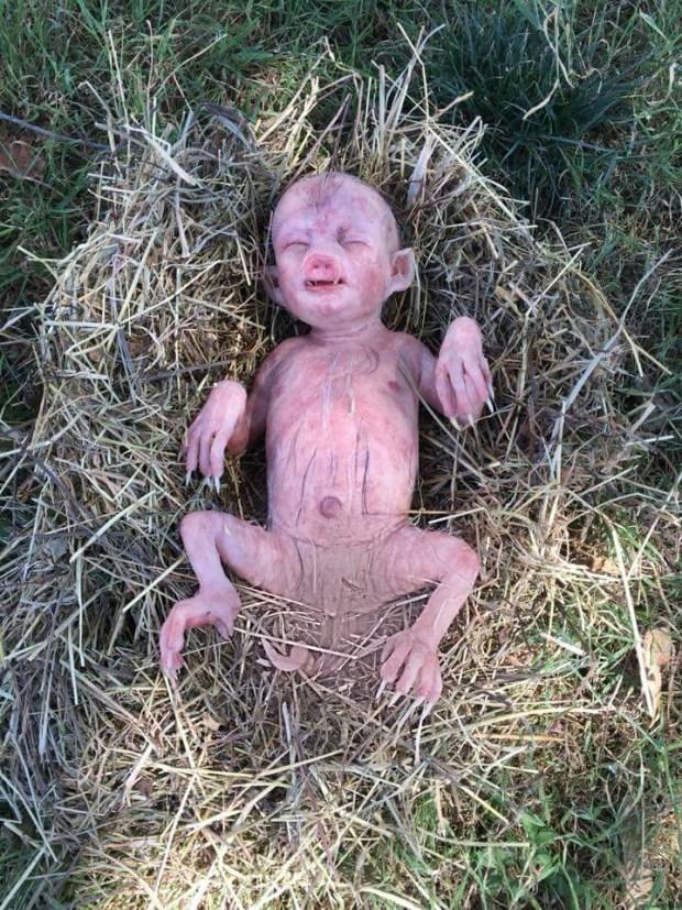 الغباء لا دين له.. حقيقة الطفل الخنزير وعلامات الساعة!! (صور)