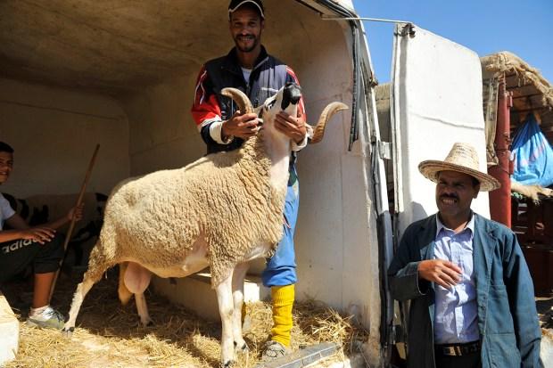 وفقا للحسابات الفلكية.. موعد عيد الأضحى في المغرب