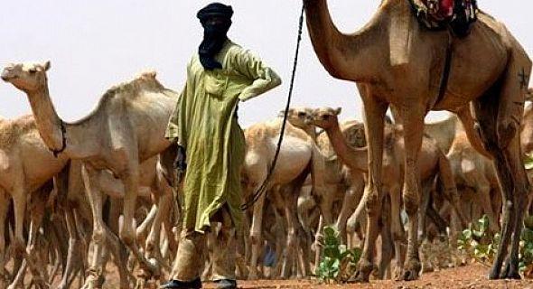 السمارة.. اعتقال سينغالي يرعى الماشية في منطقة عسكرية