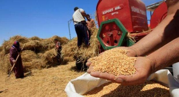 الصابة زينة.. وزارة الفلاحة تحضر لتسويق محصول الحبوب