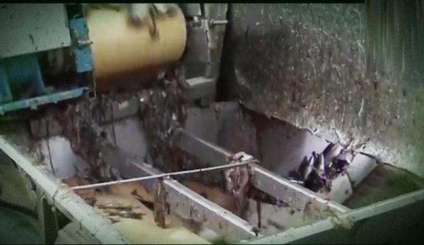 المرسى/ العيون.. مقتل عامل في آلة لطحن السمك