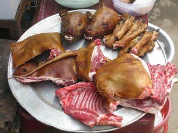 المحمدية.. المتورطون في ذبح حيوانات مريضة وترويج لحوم الكلاب أمام المحكمة