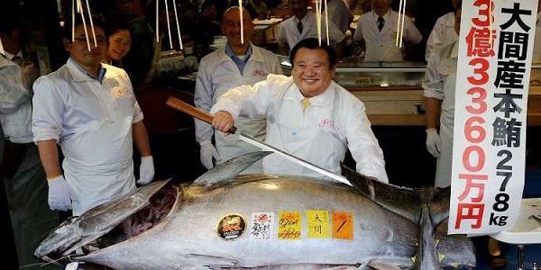 بالفيديو والصور من طوكيو.. ياباني يشتري سمكة بأكثر من 3 ملايين دولار!