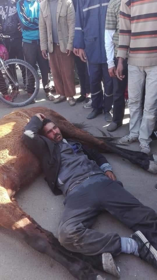 مشهد مؤثر.. سائق عربة يبكي على جثة حصانه (صور)
