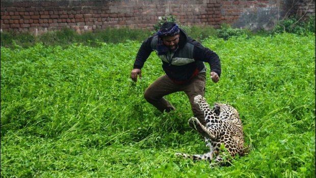 بالصور والفيديو.. فهد يهاجم سكان مدينة هندية