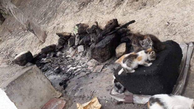 آسفي.. شخص يحرق 40 قطة وجمعية تضع شكاية ضده