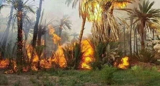 بالفيديو.. حريق كبير في جماعة أفوس إقليم الراشيدية