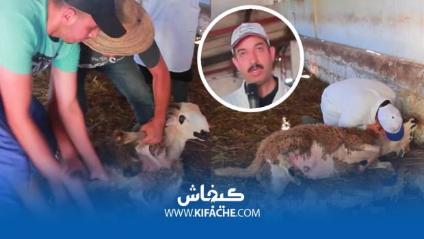 الرقية الشرعية ديال الخرفان.. دعاء كيخلي الكبش يستسلم!