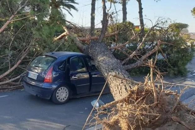 بسبب وفاة مهاجر مغربي سقطت عليه شجرة.. التحقيق مع 4 مسؤولين في إيطاليا