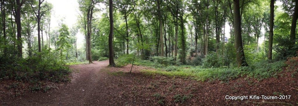 Im Wald über dem Rinderbach – Café Herberge