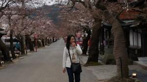 Gaisen Sakura
