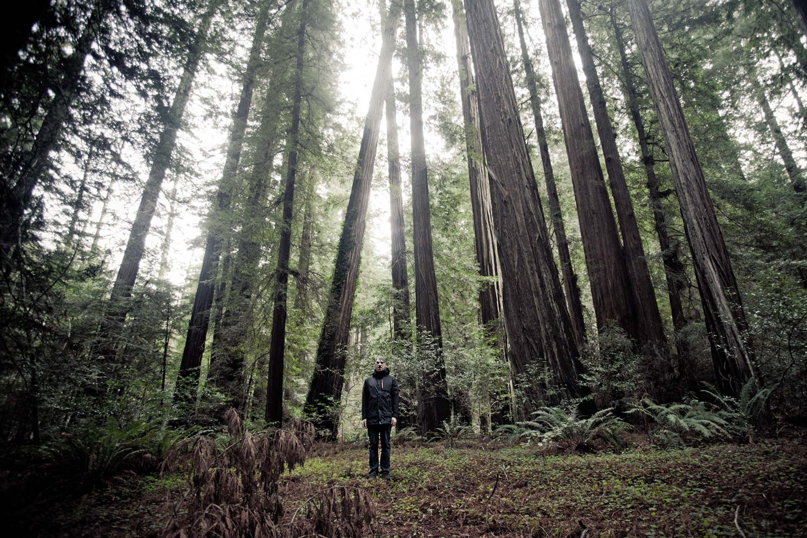 Hitler visiting the Redwoods, California