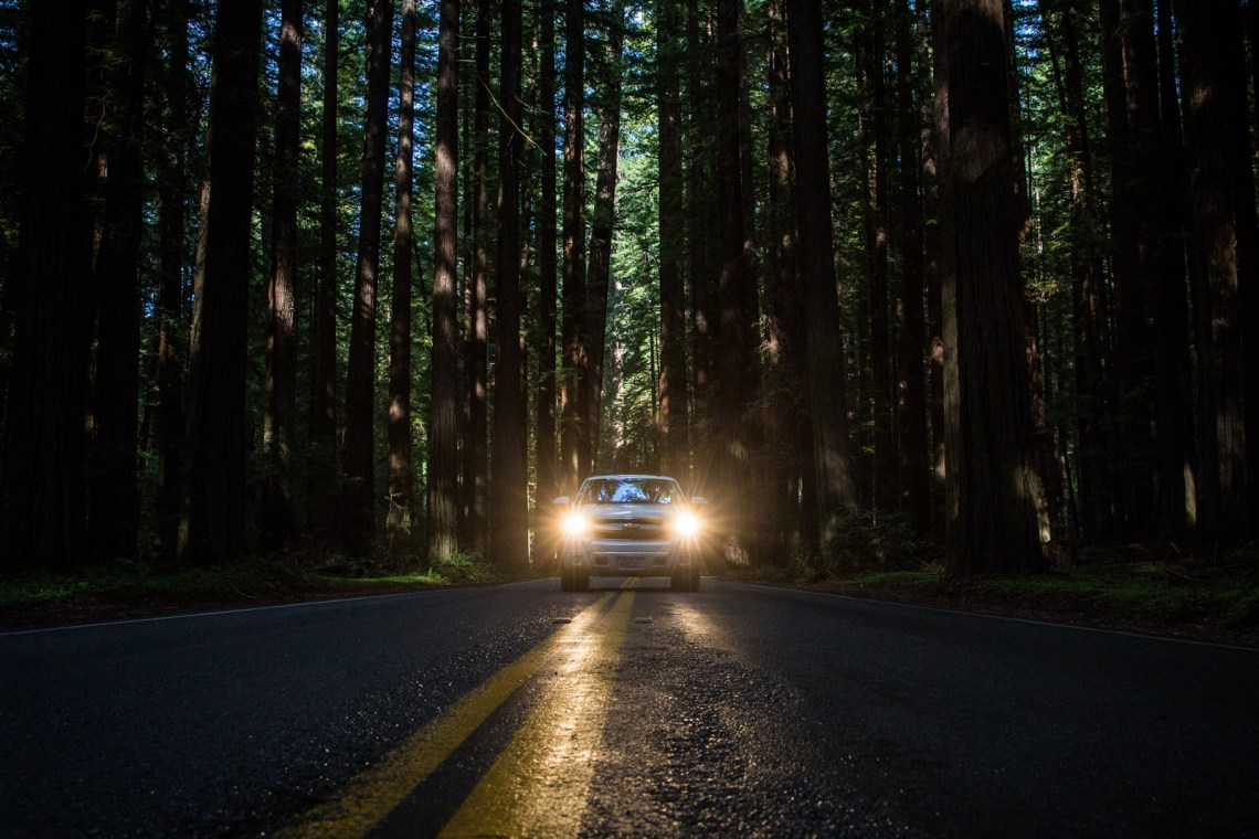 bolfo_0010s_0001_Redwood