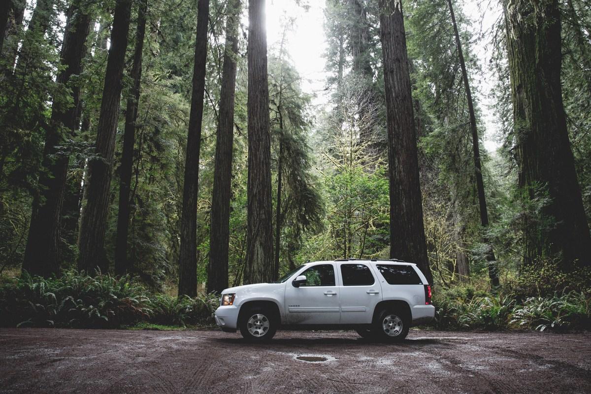 bolfo_0010s_0004_Redwood